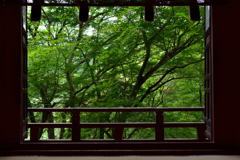 深緑の拝殿