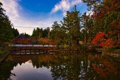 秋 色づく蓮池