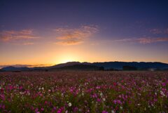 楽園の夜明け~藤原京跡