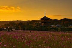 秋~夕焼けの三重塔