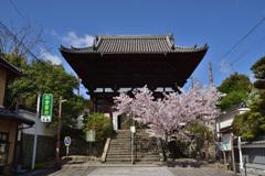 春の仁王門~當麻寺