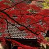 紅葉の長谷寺
