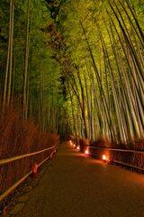 竹林の小径~嵐山花灯路