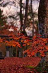 秋の名残~宝厳院