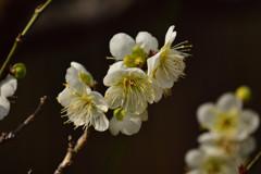 春の気配⑤