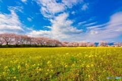 嗚呼 藤原京の春