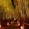 花灯路~竹林の小径