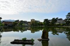 穏やかな早朝~猿沢池