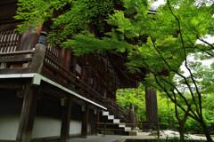 青葉の中の阿弥陀堂