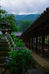 登廊と紫陽花~長谷寺