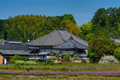 蓮華咲く 飛鳥寺