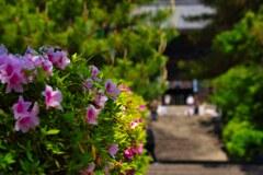 花の御寺~長谷寺