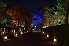 宝厳院前~嵐山花灯路2018