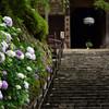 紫陽花のある寺 参