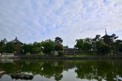 穏やかな早朝~猿沢池 弐