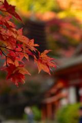 多武峰の秋