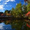 壇上伽藍 蓮池の美