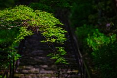 新緑が美しい~長谷寺