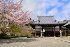 阿弥陀堂と桜~當麻寺奥院