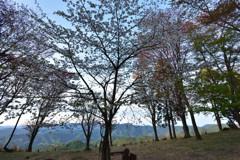 山桜散る #3