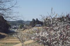 明日香村 大字阿部山( 国営飛鳥歴史公園 キトラ古墳周辺地区 )