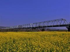 小布施橋と菜の花