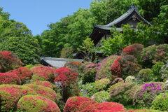 ツツジの咲く寺