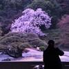 玉藻池の桜