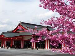 身代わり不動尊と陽光桜