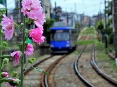 立葵と世田谷線