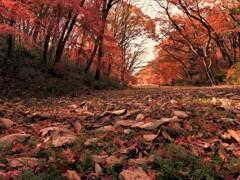 桜ケ丘公園の紅葉