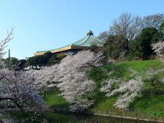 日本武道館と桜
