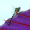 和傘と蜻蛉