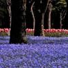 日比谷公園の春景色