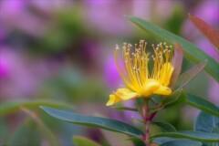 季節外れに咲く花