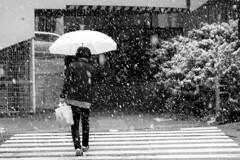 雪が降り始めました。