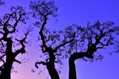 日比谷公園の夕景