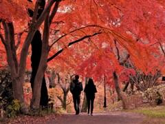 桜ヶ丘公園にて