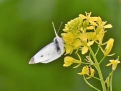 花と蝶と蜂