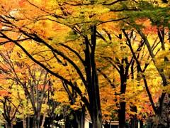 錦秋の日比谷公園