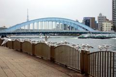 永代橋とユリカモメ