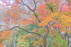 代々木公園の紅葉