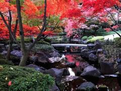 日本庭園の紅葉