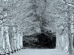 プラタナスの並木とベンチ