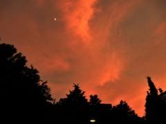燃える日比谷の森