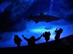 鮫と戯れる子供達