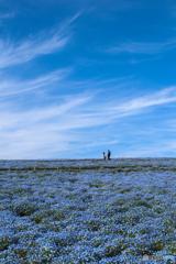 春色の丘へ