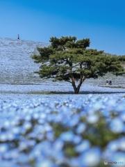 春色の丘へ 其の二