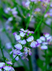 瑞々しい紫彩