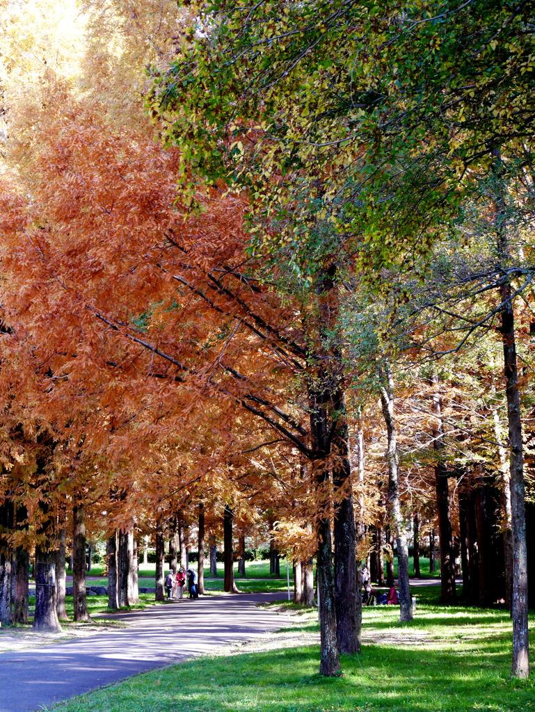 緑葉と紅葉